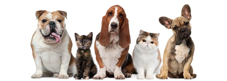 Online #Pet Supplies in India.Free #dogs for adoption.Online #PetAccessories, food, #kennels, grooming, products in India.Online Pets,Dogs,Cat,Fish,#Parrot,Pig,#Rabbit,Birds in India. Visit: http://pets.lallabi.com