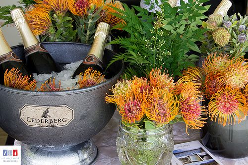 Franschhoek Cap Classique & Champagne Festival ,beautiful pincushion flowers, indigenous to South Africa