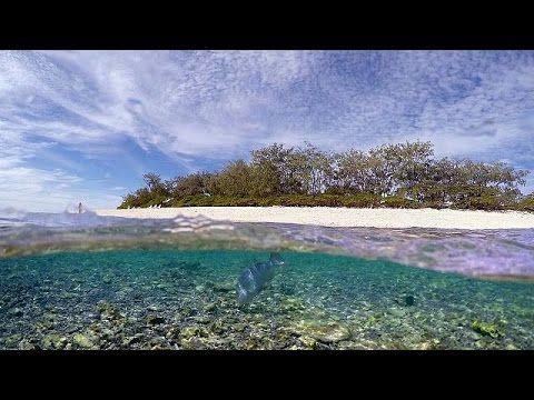 Cronaca: #Greenpeace #denuncia lo #sbiancamento della Grande Barriera Corallina (link: http://ift.tt/2lMkMH1 )