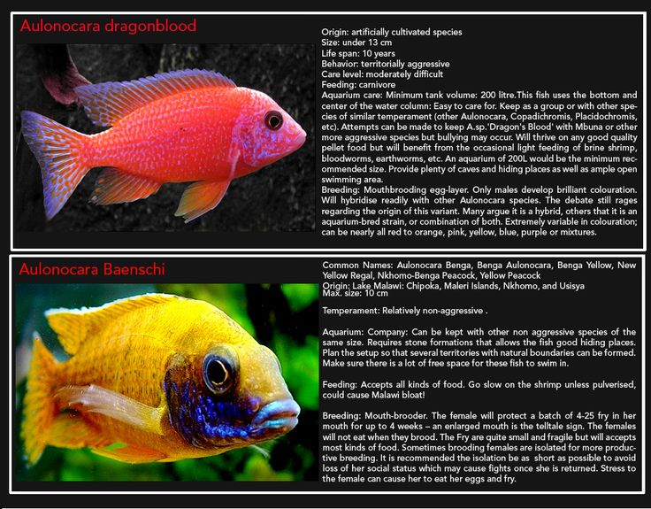 30 best images about lake fish on pinterest african for Fish at 30 lake