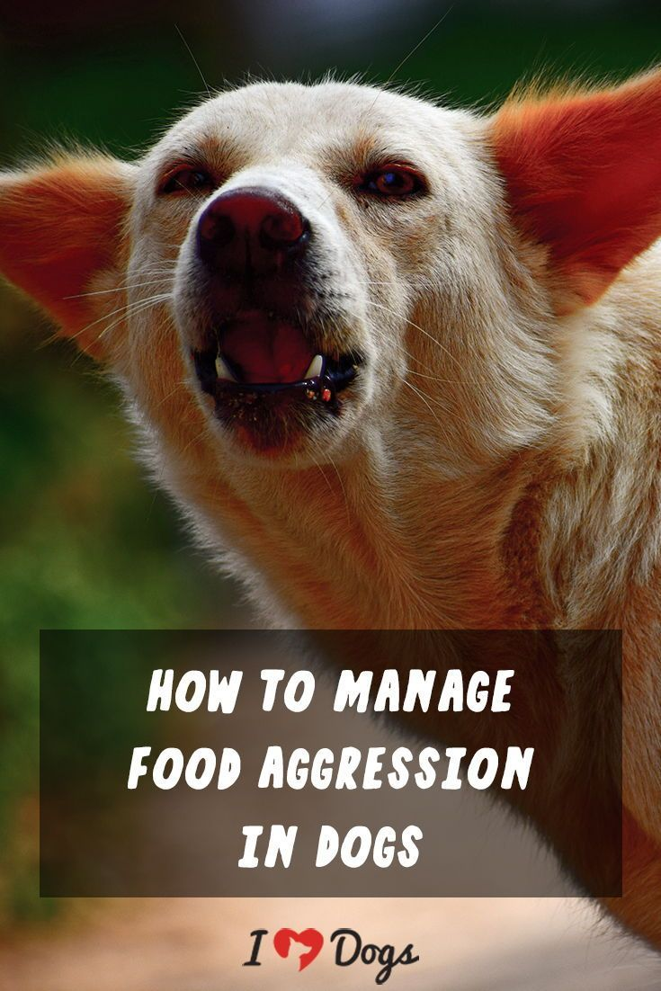 How to manage food aggression in dogs training your dog