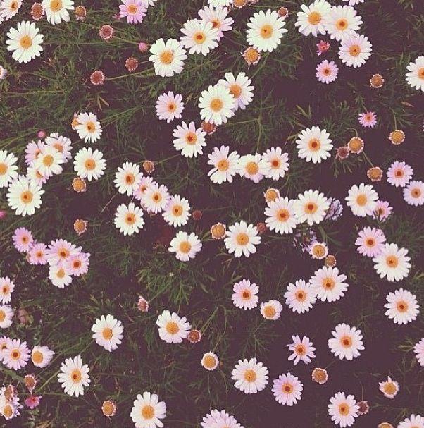 102 Best FLOWERS Images On Pinterest
