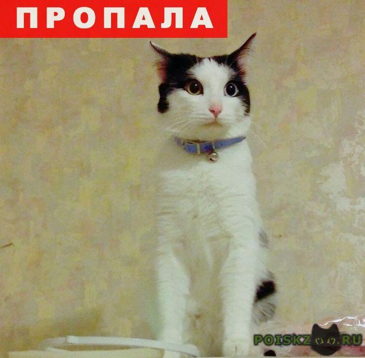 Пропал кот арчи г.Челябинск http://poiskzoo.ru/board/read25406.html  POISKZOO.RU/25406 Пропал кот по имени Арчи (.. июля .. г. г. Челябинск, в районе теплотеха) Возраст :.. год Приметы: Черно-белого окраса с ошейником как на фото, глаза разного цвета (один желтый другой голубой), на одном из ушей нет кончика уха. Убежал через окно на первом этаже. Очень переживаем и хотим найти! не будьте равнодушны! Если кто-то что-то знает или видел, позвоните по номеру (указаны ниже). Мы очень переживаем…