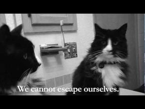 Sad French Kitty Video Wins 'Best Cat Video on the Internet'