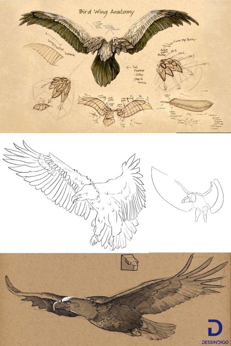 Comment dessiner un aigle apprendre dessiner avec - Comment dessiner un aigle royal ...