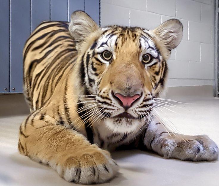 Photo: Tiger Habitat