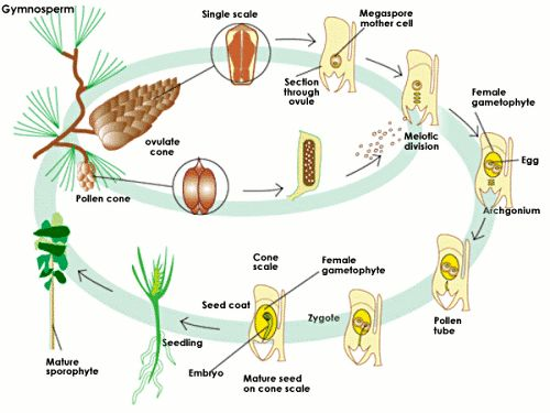 Cycles in Biology    A Level Science   Marked by Teachers com Marked by Teachers