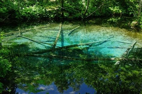 【神の子池】弟子屈|裏摩周の近く(4km)で、冷たく透き通った湧水による池。摩周湖の地下水が湧き出しており、池の底がエメラルドグリーンの神秘的な色彩を呈している。池の中にはオショロコマが泳いでいる。近くには自然の温泉が湧き出ていて、勇気さえあれば勝手に入って楽しめる。