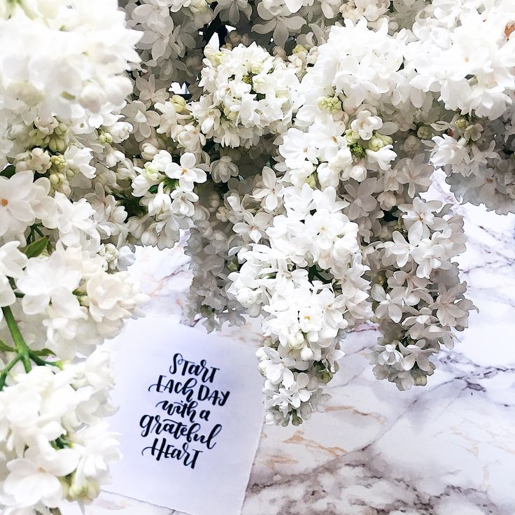 #flatlay #inspiration #flowers # quotes