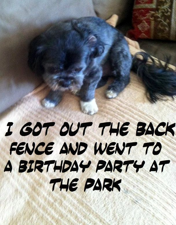 136 best images about dog shaming on pinterest