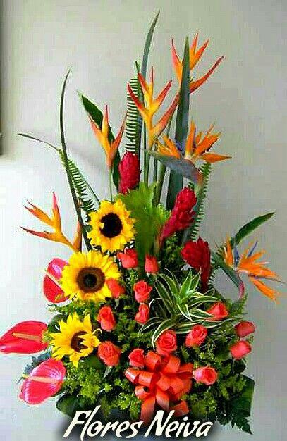 Flores Neiva Colombia 3153335017
