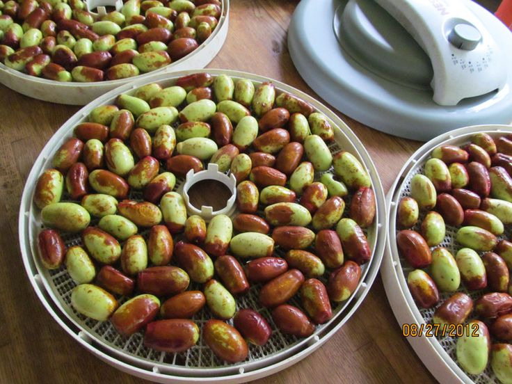 Selection of jujube tree varieties.Care guides and expert advice. @ JustFruit & Exotics, FL.