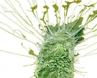 Zencefil sarmak: Akciğerlerinizden balgamı söker ve bir gecede öksürüğü tedavi eder - SüPERiLERi