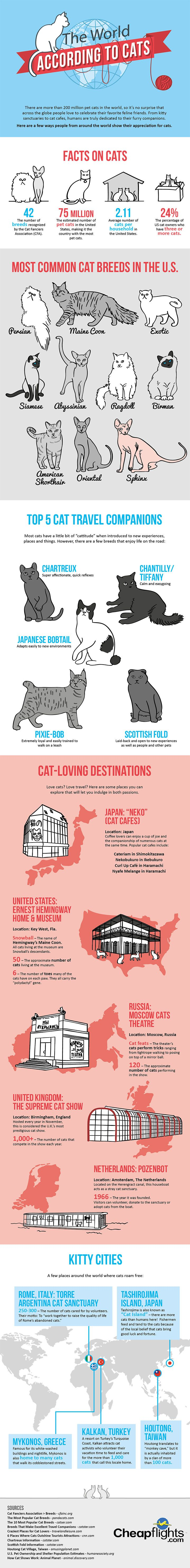 A Guide to the World According to Cats