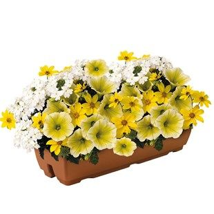 Sunshine Mix 2 Pre-Planted Troughs Comes with a FREE plant hydrator for more effective watering Buy 2 pre planted troughs and save £5!Have a bright, sunny display every day in your garden this summer with this gorgeous mix of Yellow Pe http://www.MightGet.com/january-2017-11/sunshine-mix-2-pre-planted-troughs.asp