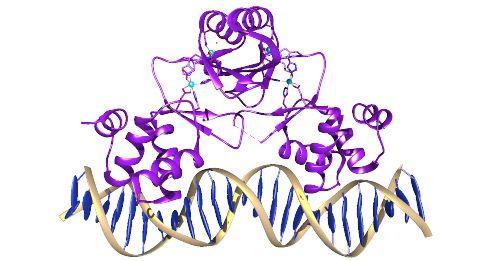 PDBe: Exploring a Protein Data Bank (PDB) entry | EMBL-EBI Train online
