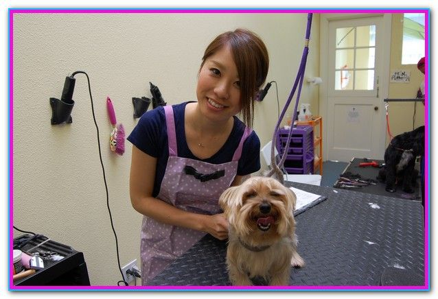 Dog Grooming Certification Online If You Ve Recently Made The Decision To Get Your Dog Grooming Certification Onl Dog Grooming Emotional Support Dog Grooming