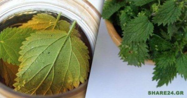 Αυτό το βότανο σταματά την τριχόπτωση
