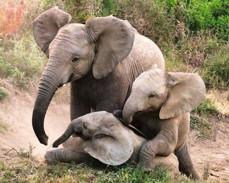 Adorable creatures..!! From: @rhinoafrica - For info about promoting your elephant art or crafts send me a direct message @elephant.gifts or emailelephantgifts@outlook.com . Follow @elephant.gifts for inspiring elephant images and videos every day! . . #elephant #elephants #elephantlove