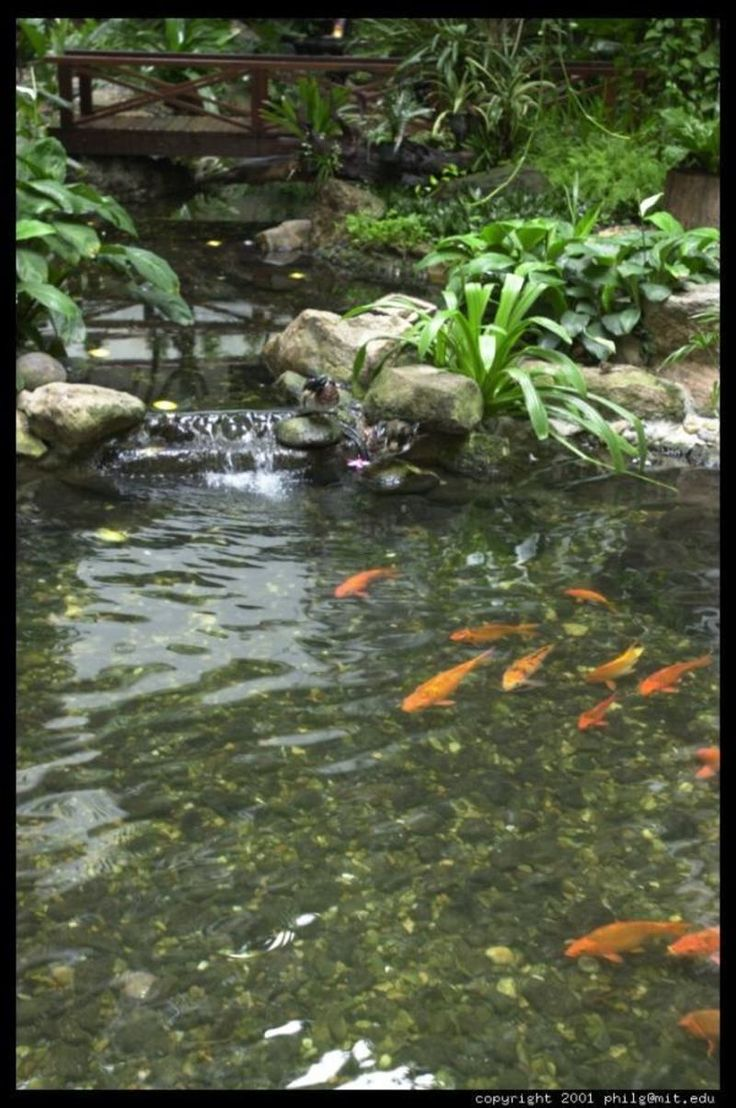 17 best images about home gardens on pinterest gardens for Small koi pond