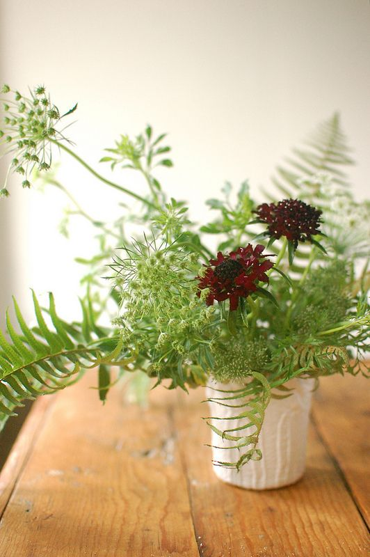 Ferns queen anne's lace - stunning  from frolic blog