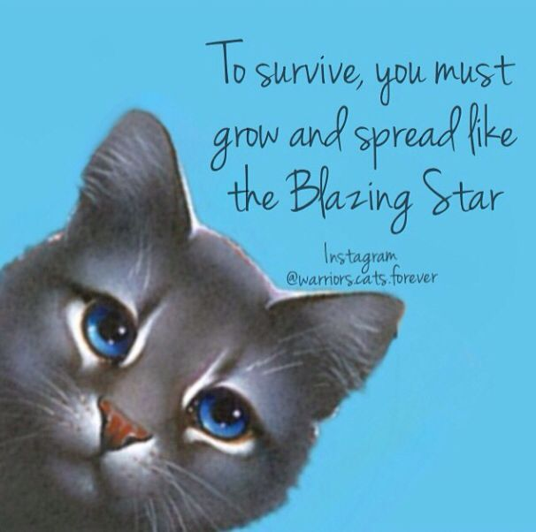 268 Best Warrior Cats Quotes And Memes Images On Pinterest