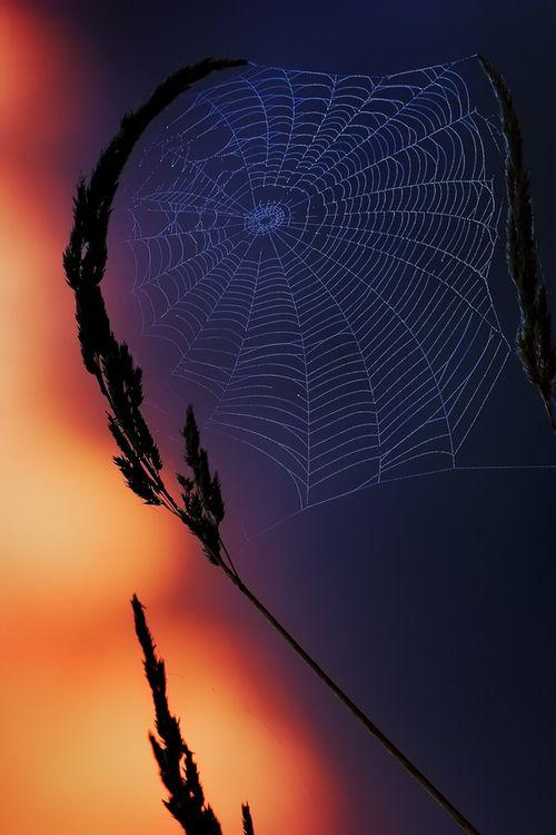 **Intricate web