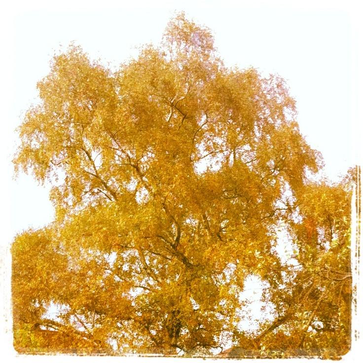 The autumn tree.
