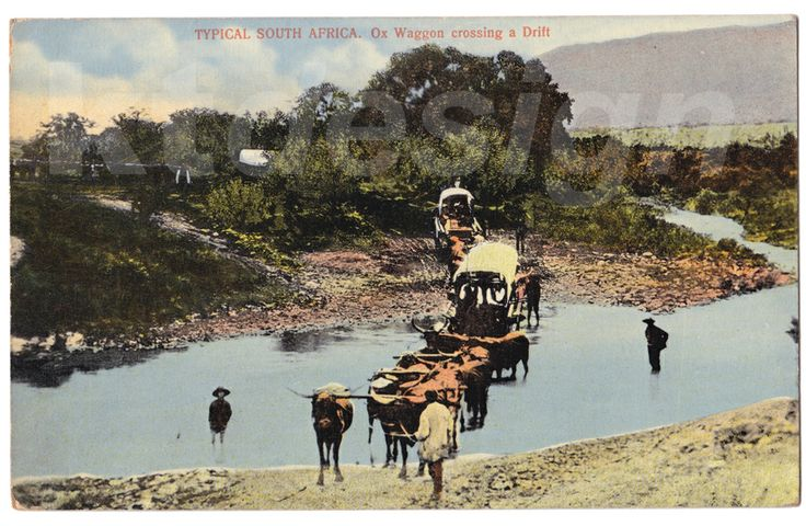 TYPICAL SOUTH AFRICA. Ox Waggon crossing a Drift. Vintage postcard.