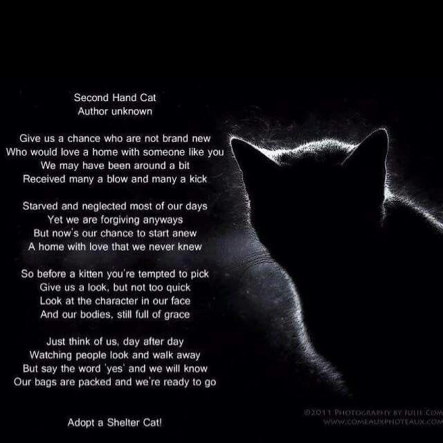 Don't forget the adult cats and seniors♥