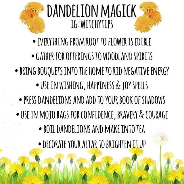 Tips For Witches Everywhere On Instagram Dandelion Magick If Your Yard Is Like Mine It S Overtook By Bright Y In 2020 Magickal Herbs Herbal Magic Magic Herbs