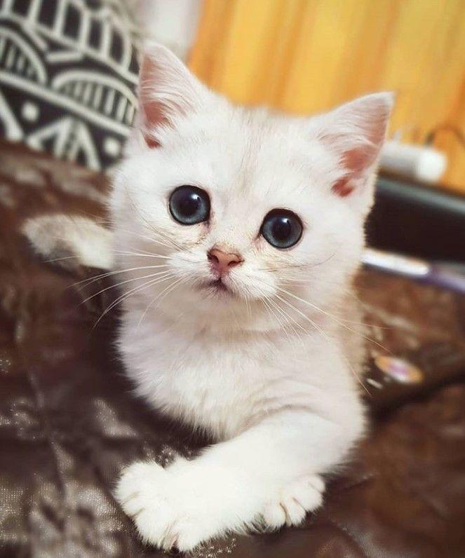 100 Most Popular Cat Names Cat Noises Cats Most Popular Cat Names