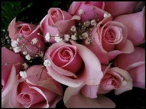 Różowe, Róże
