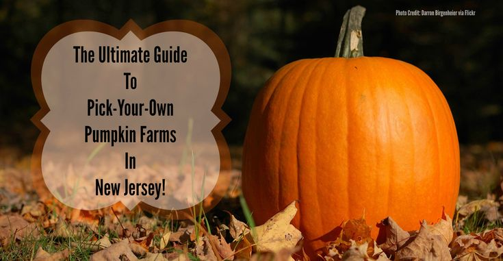 The Ultimate Guide to Pick-Your-Own Pumpkin Farms in New Jersey! | Things to Do In New Jersey | #pickyourownpumpkins #pumpkinpicking #nj #newjersey #farms #hayrides #kids #pumpkins #fieldtrips