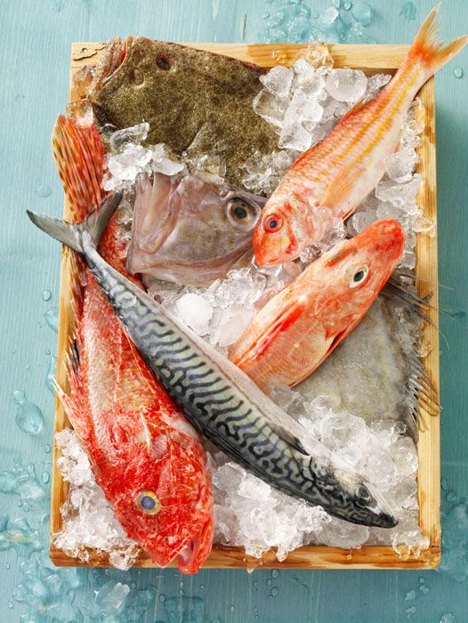 12 best images about raw fish food photography on for Best koi food