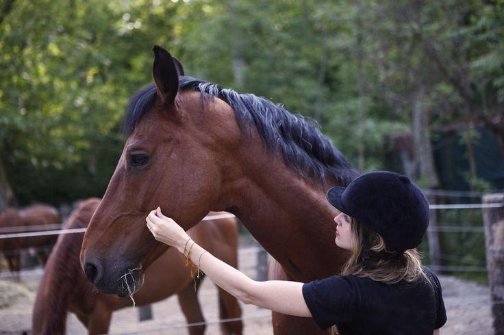 Consigli per la pulizia del cavallo: Come promesso oggi vi do qualche dritte su come pulire il cavallo.Ho provato diverse spazzole