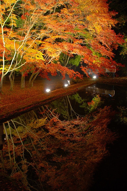 This photo was taken in Japan. The bright warm colours of the leaves being reflected into the pond or lake show how beautiful autumn can be. The expression clarity of the photo is amazing at the reflection in the pond is more focused than the tree itself. This essentially, makes the subject matter the reflection. Even-though, the tree itself is what the viewer would initially look at.