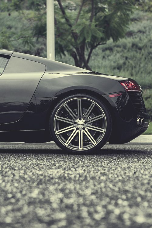 R8. Showin off that nice tail..