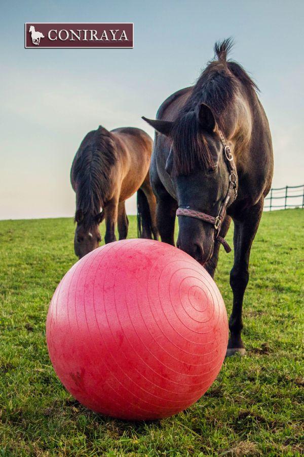 Piłka to nasz sport narodowy! :) #konie #coniraya