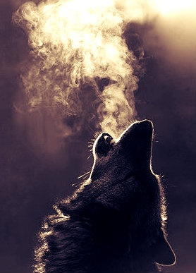 // S] #Wolf #wolves