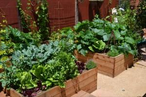 raised beds = not so much; wood chips on the garden paths = winner!