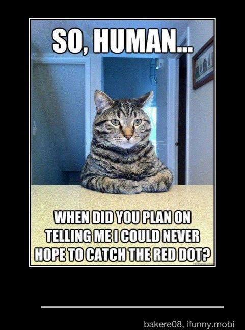 : Cats, Animals, Funny Things, Funny Stuff, Humor, Funnies, Dog