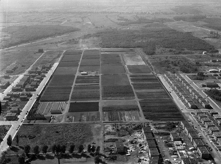 4 août 1960/ les serres de l'est dans Rosemont,et les terres et fermes expropriées>nord/la côte Saint-Michel/Montréal.