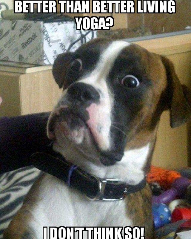 eab8c257b233caa53c8e62c489af1080 cute animal memes funny animals 41 best yoga memes images on pinterest funny pics, funny stuff