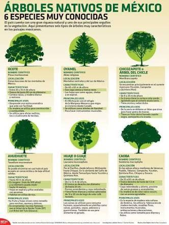 Best 25 Tipos de arboles ideas on Pinterest  Tipos de artesanias