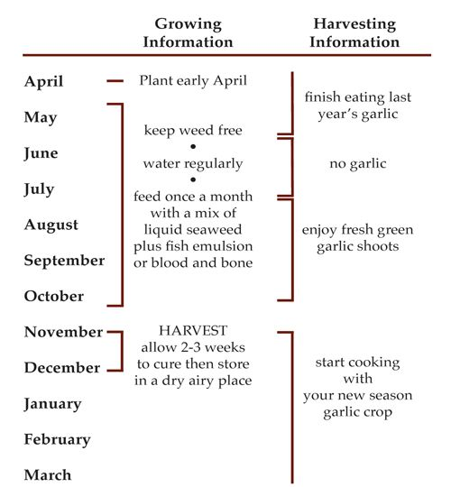 the garlic year