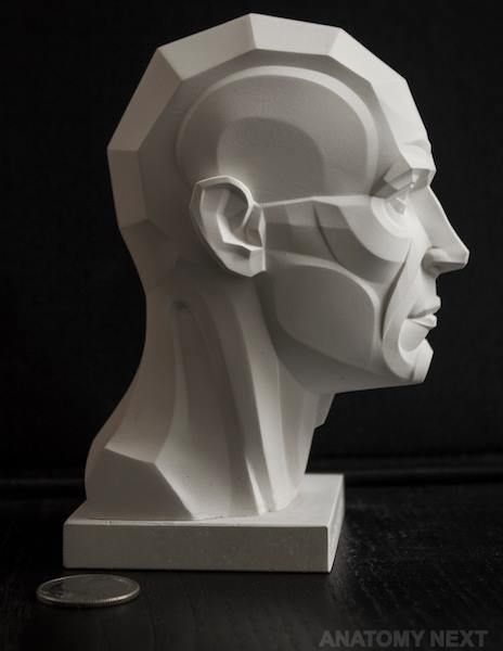 https://www.facebook.com/Anatomy4Sculptors/photos/pcb.954025404696609/954024981363318/?type=3