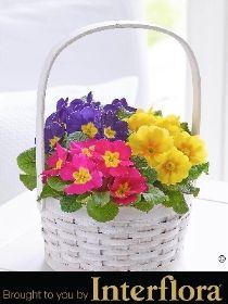 10 best spring flowers images on pinterest spring colors spring primroses florists range baskets lineup ranges basket flower shops stove mightylinksfo