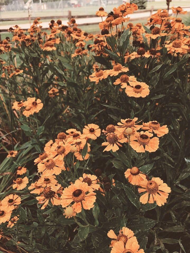 Pinterest Joyful Grace Flower Aesthetic Flower Wallpaper Pretty Flowers