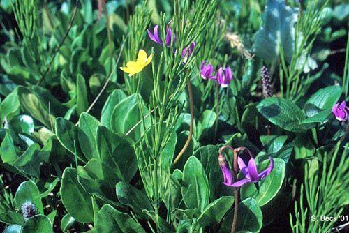Arctic Tundra Plants With Names Arctic Tundra